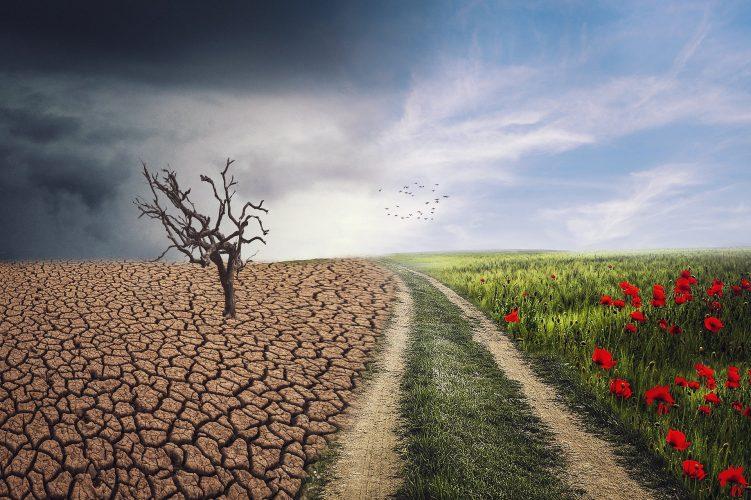 De invloed van het veranderende weer op de tuin