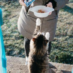 Een voederautomaat voor uw kat aanschaffen?
