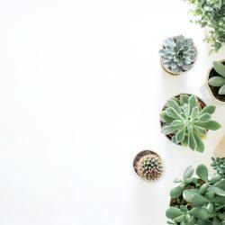 Top 3 betaalbare kamerplanten