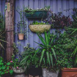 Tips bij het planten en onderhouden van een beukenhaag