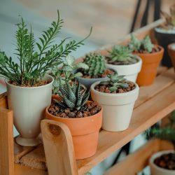 Een onderhoudsvriendelijke tuin aanleggen met deze tips!