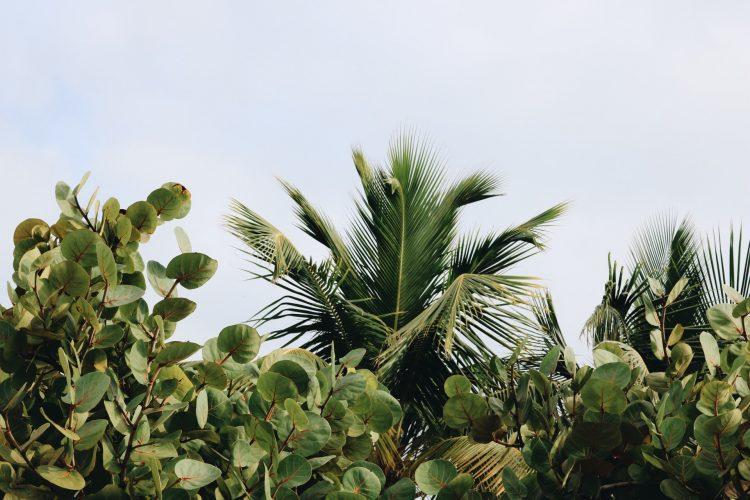 Met deze planten krijg je zeker dat tropische vakantiegevoel thuis