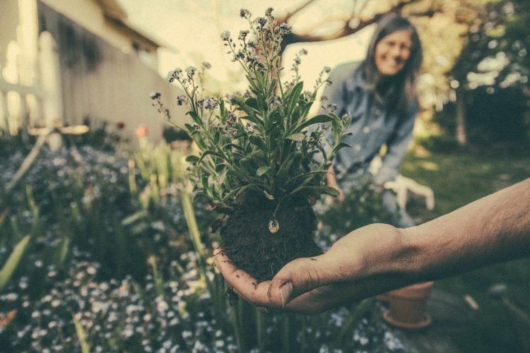 Planten kopen voor volgend jaar alvast, kan dat?