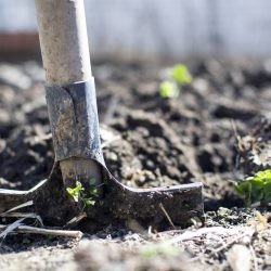 3 manieren om meer uit je tuin te halen