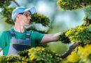 Hoe maak je jouw tuin winterklaar ?