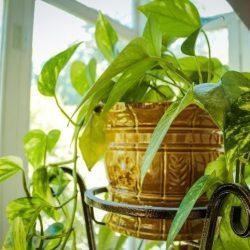 Hoe creëer je een groene overkapping? 5 tips